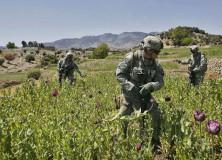 Counternarcotics Afghanistan